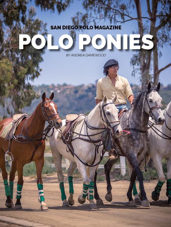 San-Diego-Polo-Magazine-Polo-Ponies